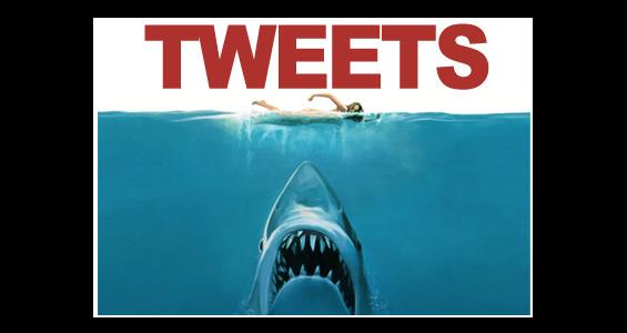 ¿Quieres seguir a tu tiburón favorito en Twitter? En Australia casi es posible