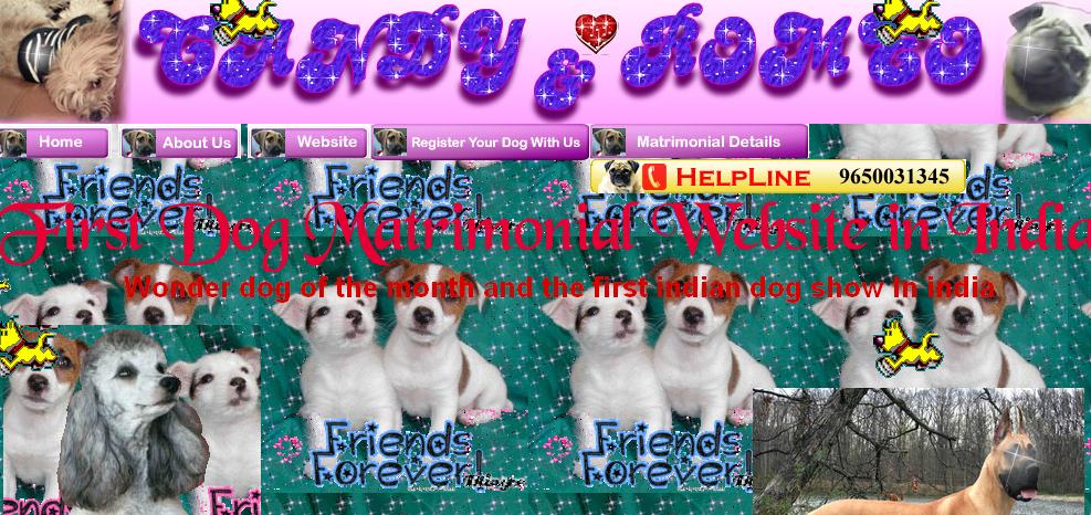 candy and romeo - blog hostalia hosting