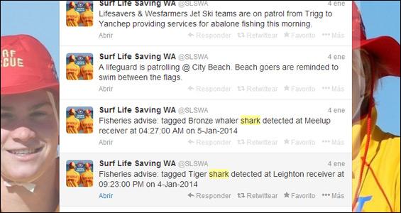 tiburon-twitter-australia-blog-hostalia-hosting