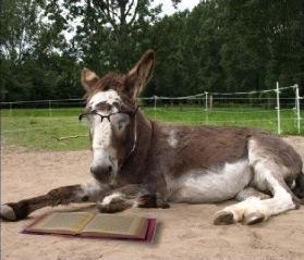 burro-leyendo-blog-hostalia-hosting